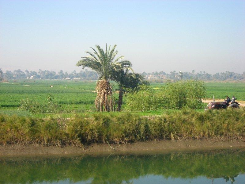 долина реки Нил, долина Нила, из Хургады в Луксор, пальмы