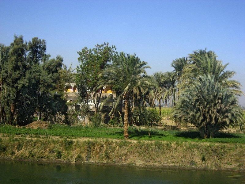 Египет, долина реки Нил, долина Нила, из Хургады в Луксор, пальмы