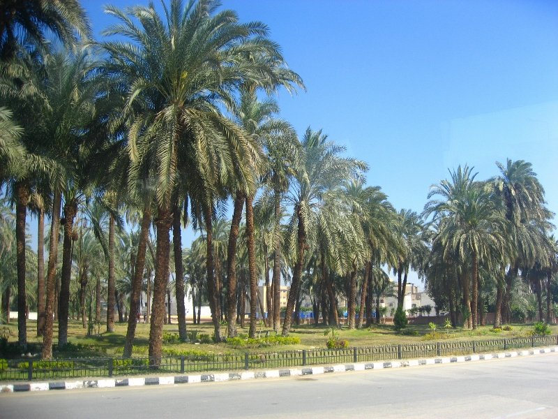 Египет, пальмы, Луксор