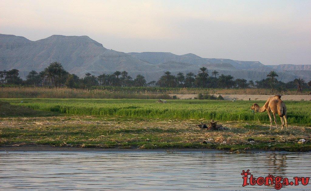 Нил, Луксор, река, Египет