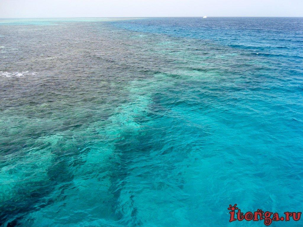 Дайвинг, Красное море, Египет, Хургада, кораллы