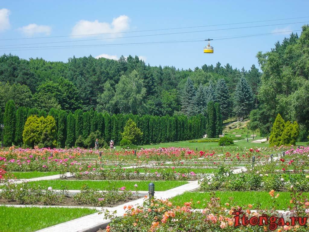 Северный Кавказ, Кисловодск, долина роз