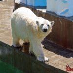 Зоопарк в Новосибирске - фото животных и важная информация