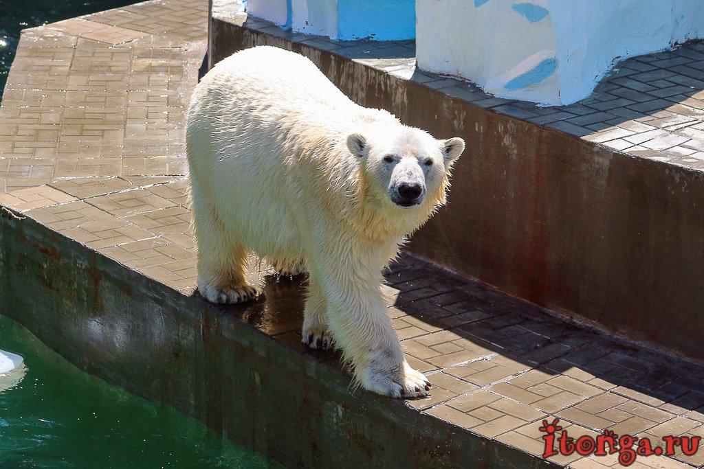 зоопарк, Новосибирск, белые медведи,
