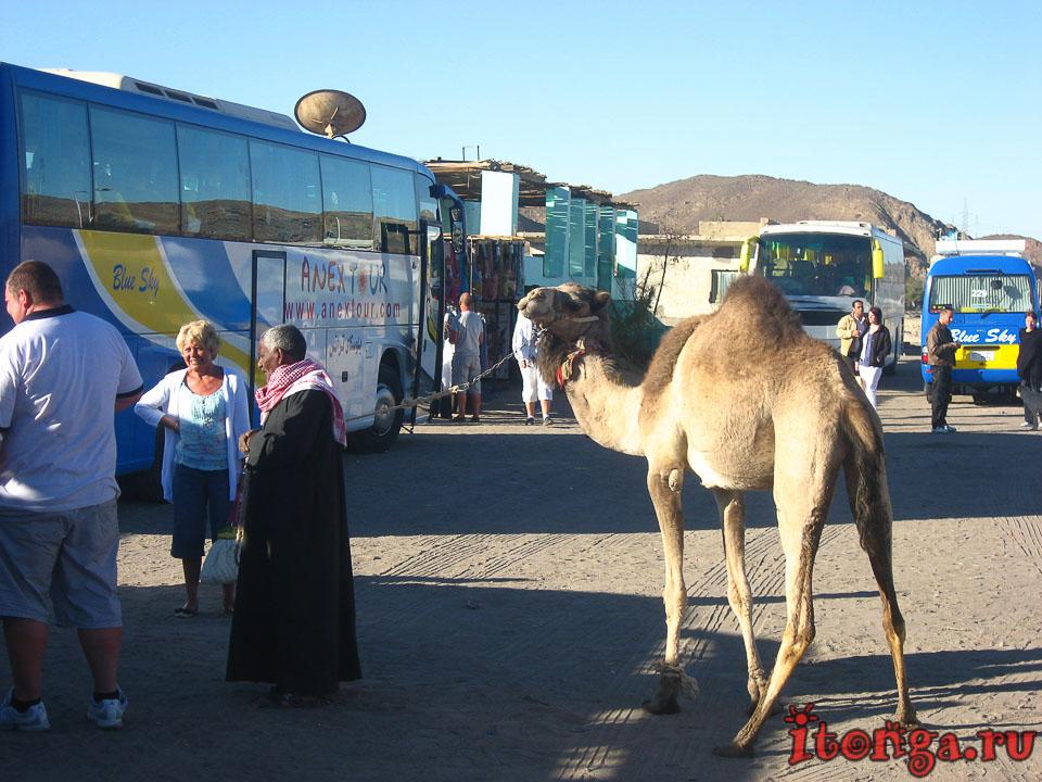 современный Египет, арабская республика, египтяне, арабы, арабы в Египте, современные египтяне,