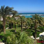 Финиковые пальмы Египта и фото других деревьев