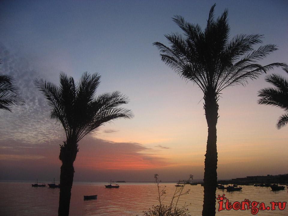 Финиковая пальма, пальмы Египта, пальма, море, фото, дерево, пляж