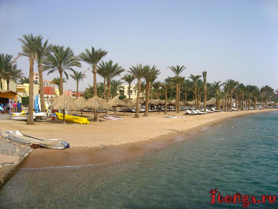 Финиковая пальма, пальмы Египта, пальма, море, фото, дерево, песок, пляж