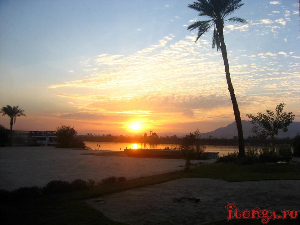 Финиковая пальма, пальмы Египта, пальма, море, фото, дерево, песок, пляж, закат