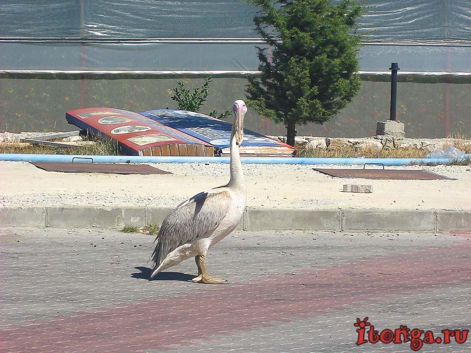 Животные и птицы Египта - Животные - hurgada, egypt
