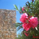 Растения Турции: пальмы, цветы и хвойные деревья