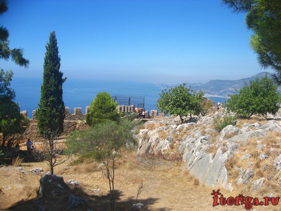 Турция, деревья, флора Турции,