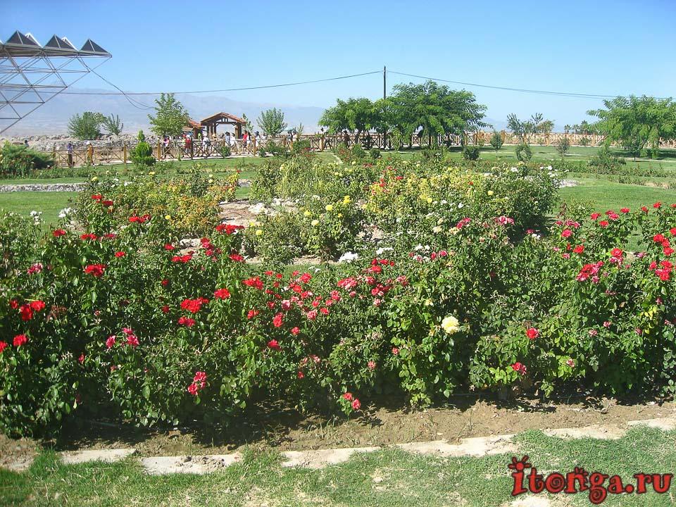 Турция, цветы, флора Турции,