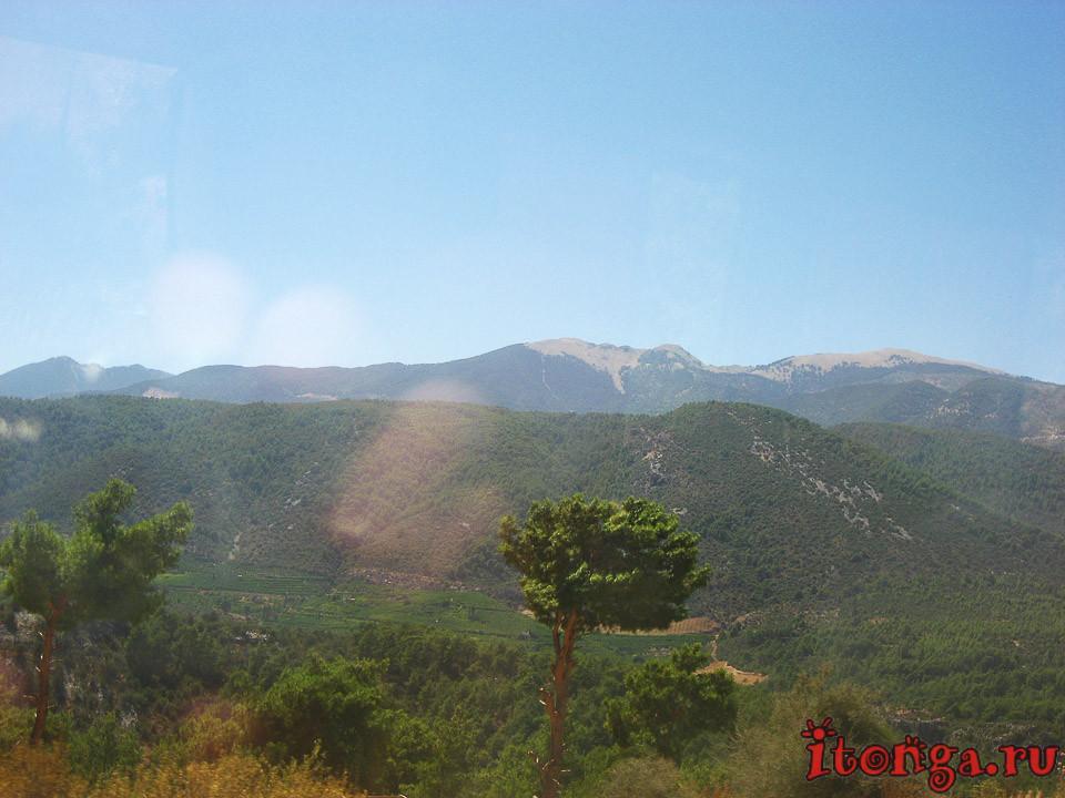 Турция, хвойные деревья, флора Турции,