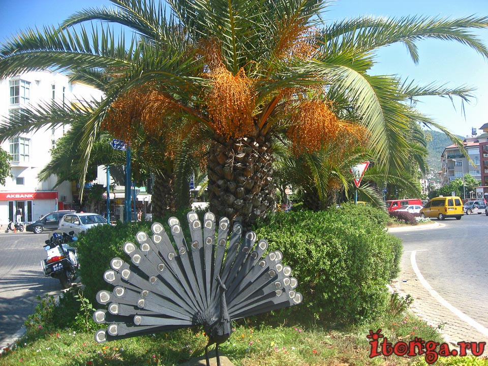 Турция, пальмы, деревья, флора Турции,