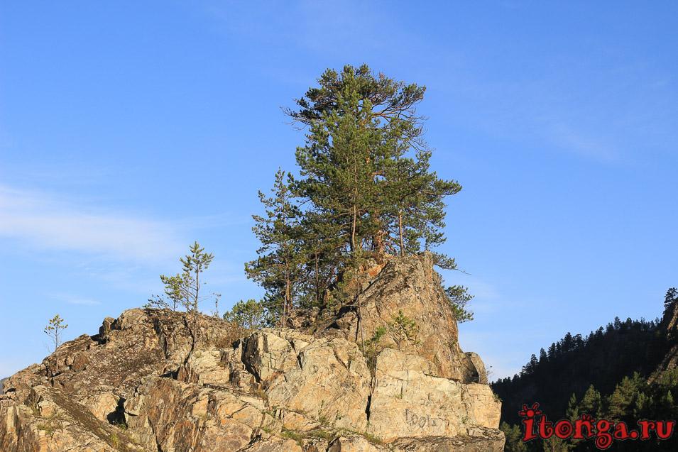 Растения Алтая: цветы, мох и другая флора - Флора, Лес - siberia, russia, altay