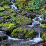 Растения Алтая: цветы, мох и другая флора