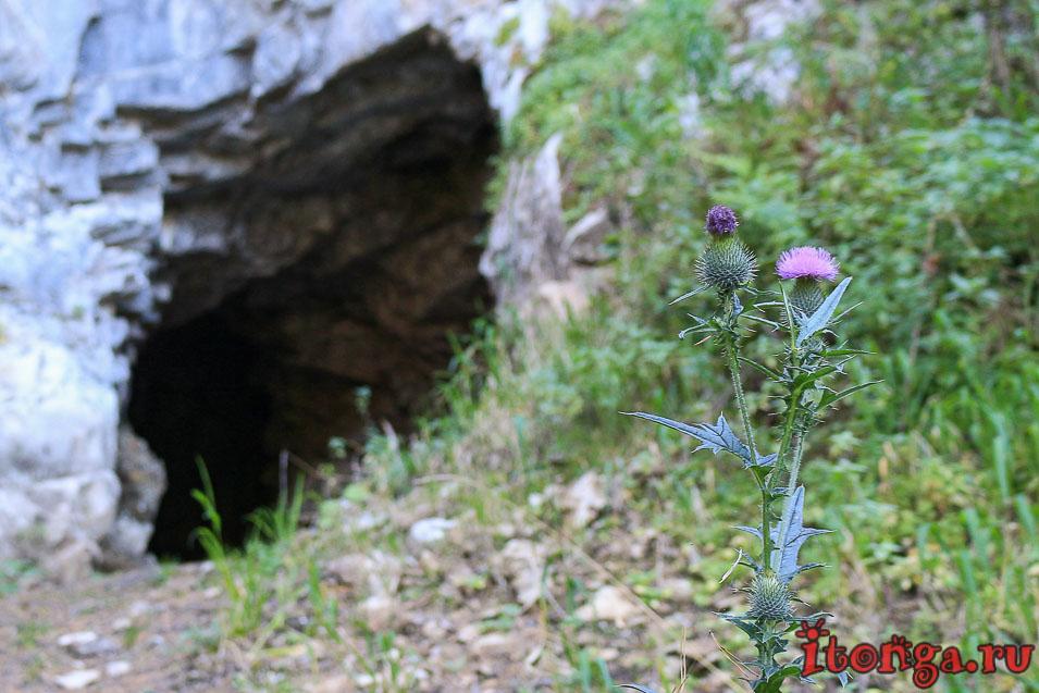 травы, Цветы Алтая, флора, растения,
