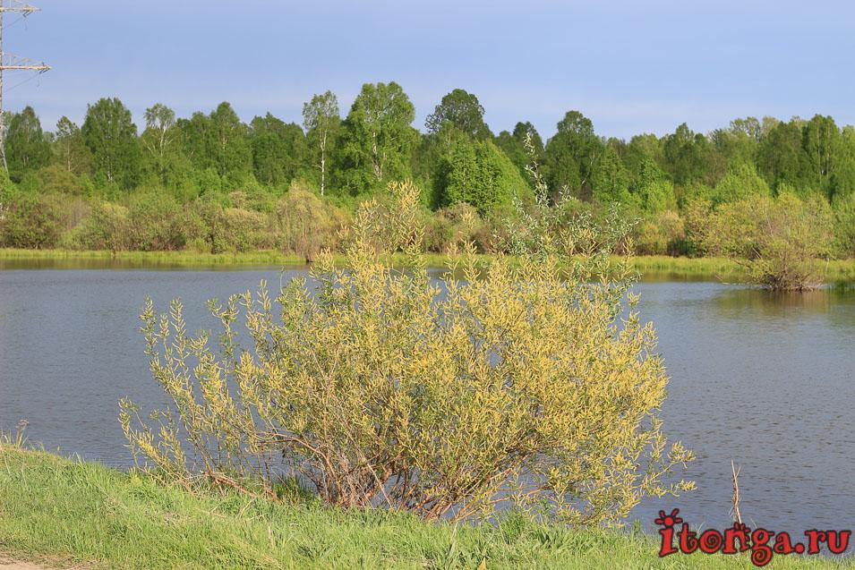 озеро Калтарак весной, Калтан,