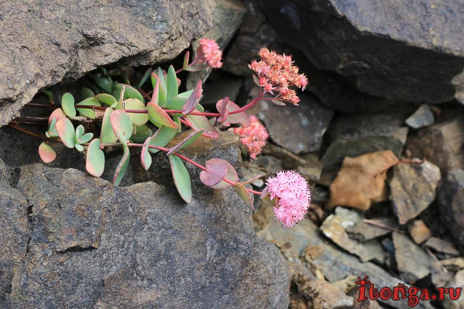 цветок, тельбесский рудник