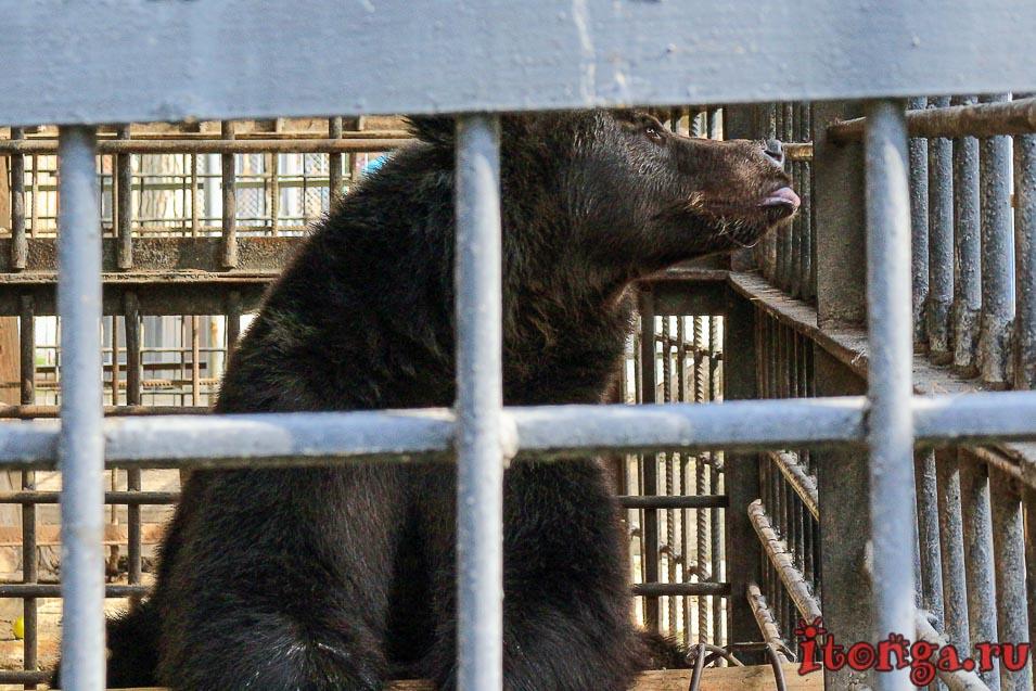 зоопарк, томская писаница, животные