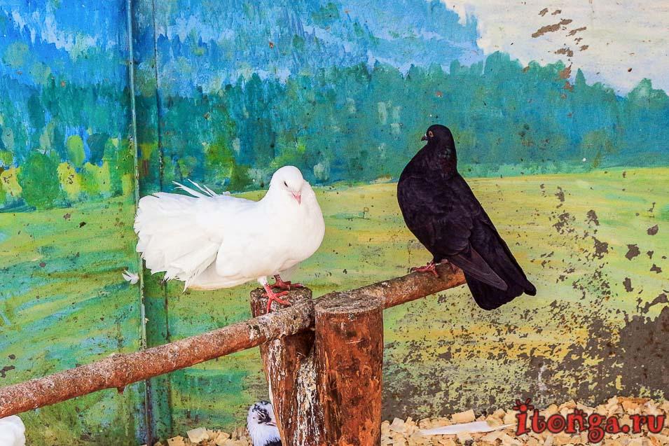животные томской писаницы, птицы