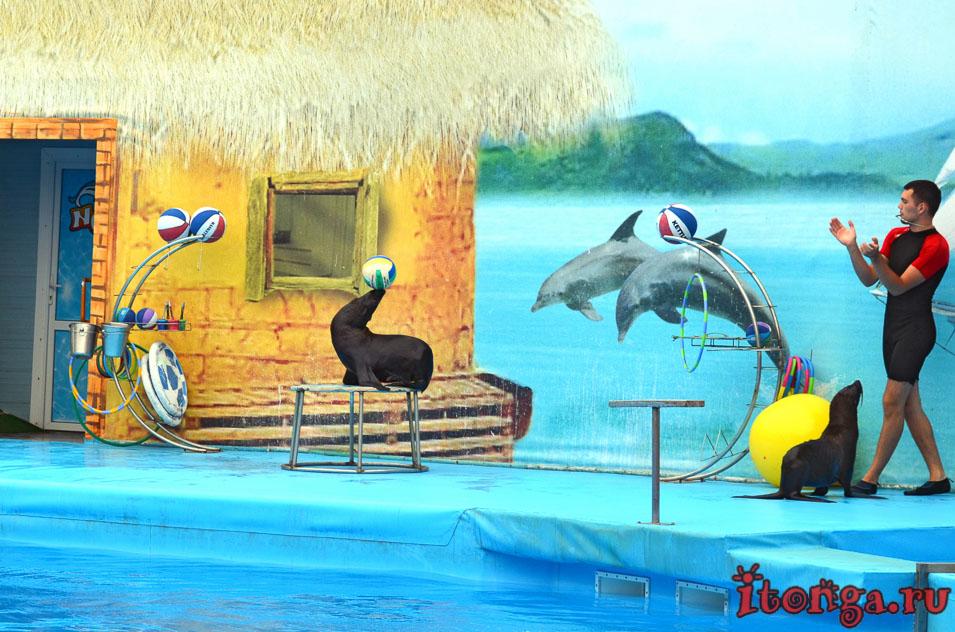 бердянск, дельфинарий