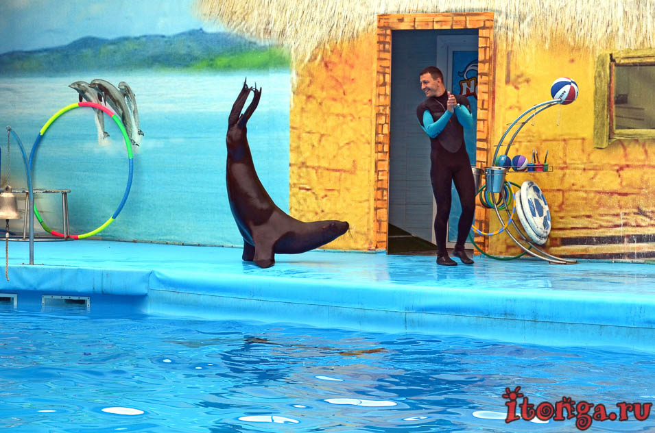 дельфинарий, бердянск