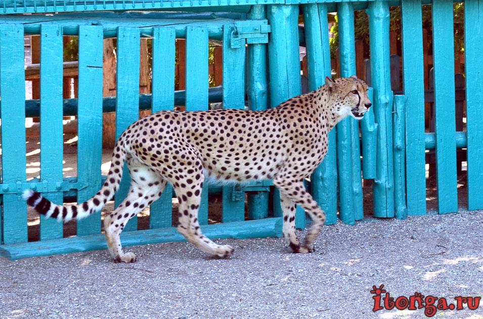 зоопарк , бердянск