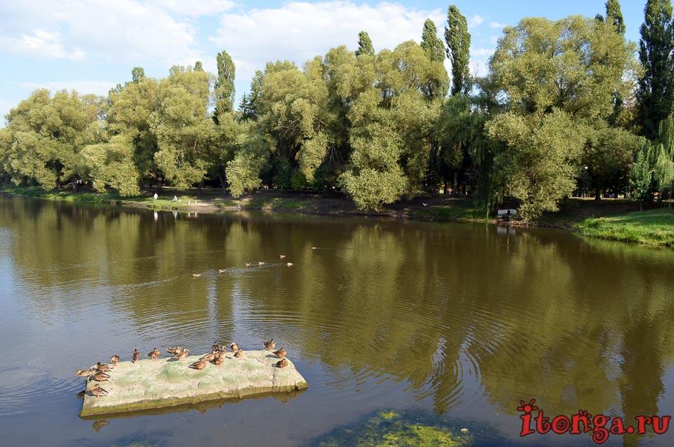 белгород, парк победы, утки