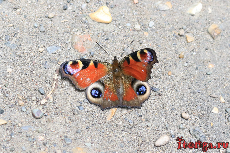 бабочка, Железноводск, терренкур вокруг горы Железной