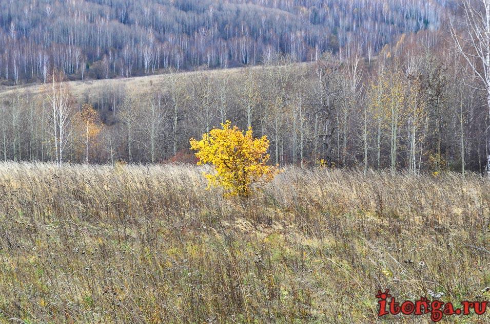 сибирская осень, фото природы, яблоня