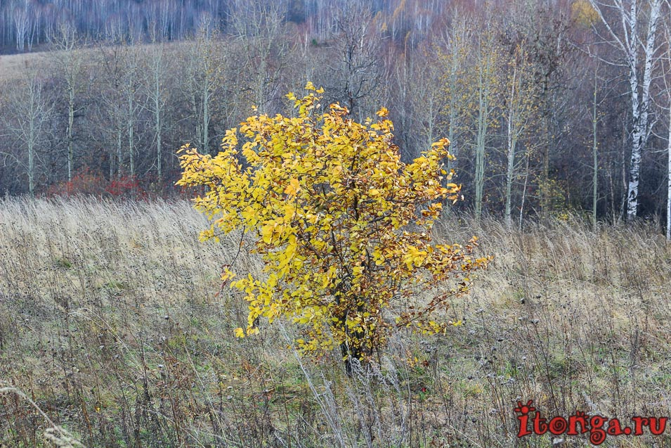 осень в сибири, фото, природа