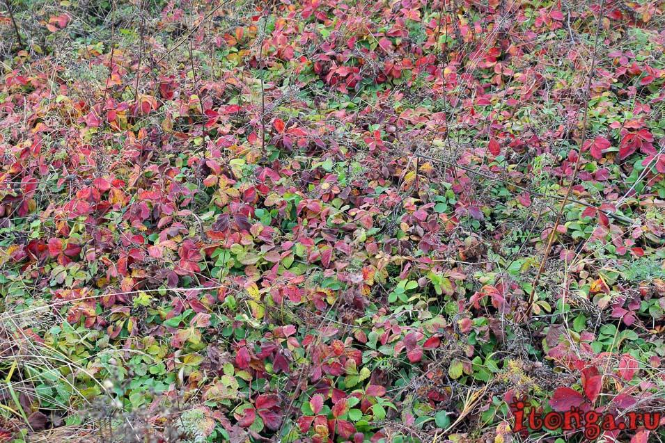 пейзажи сибири фото, осень, поселок тайжина, природа сибири