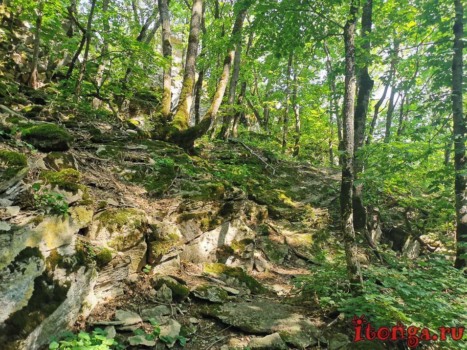 селитряные скалы, Железноводск, лес