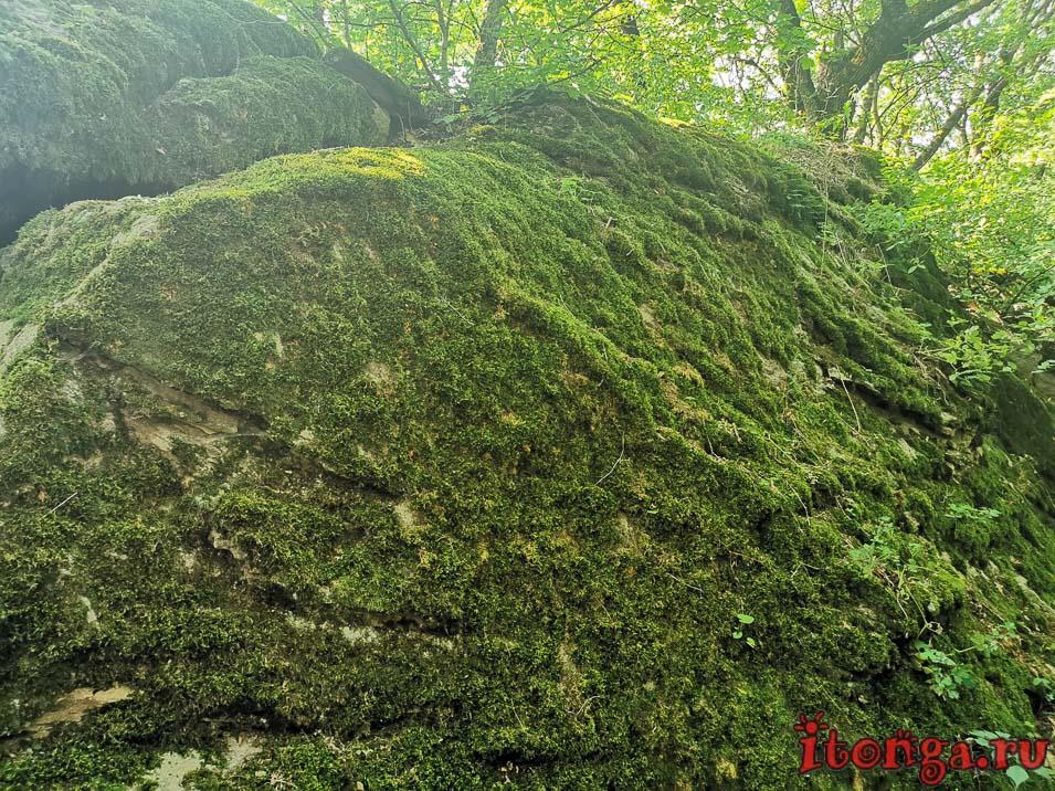 селитряные скалы, Железноводск, мох