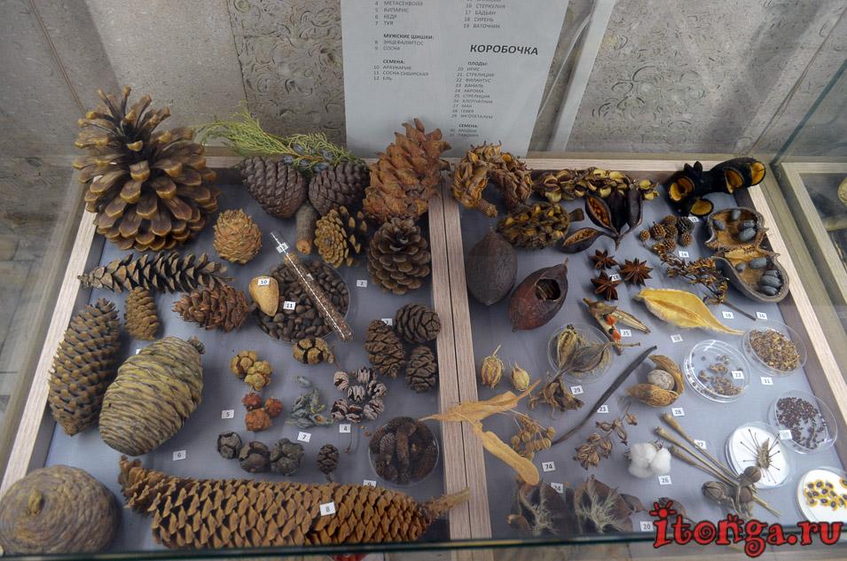 сибирский ботанический сад, томск