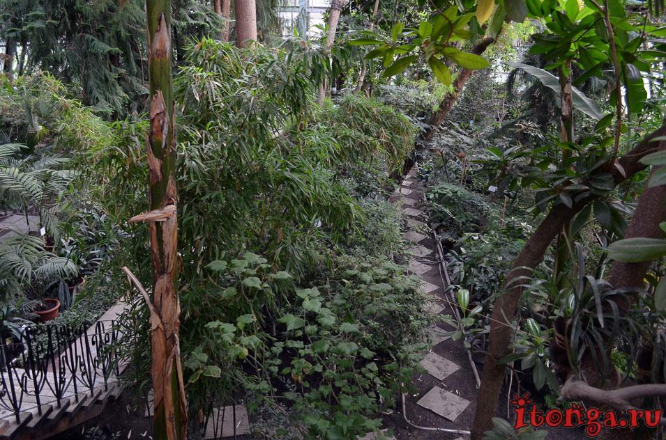 ботанический сад томск, растения