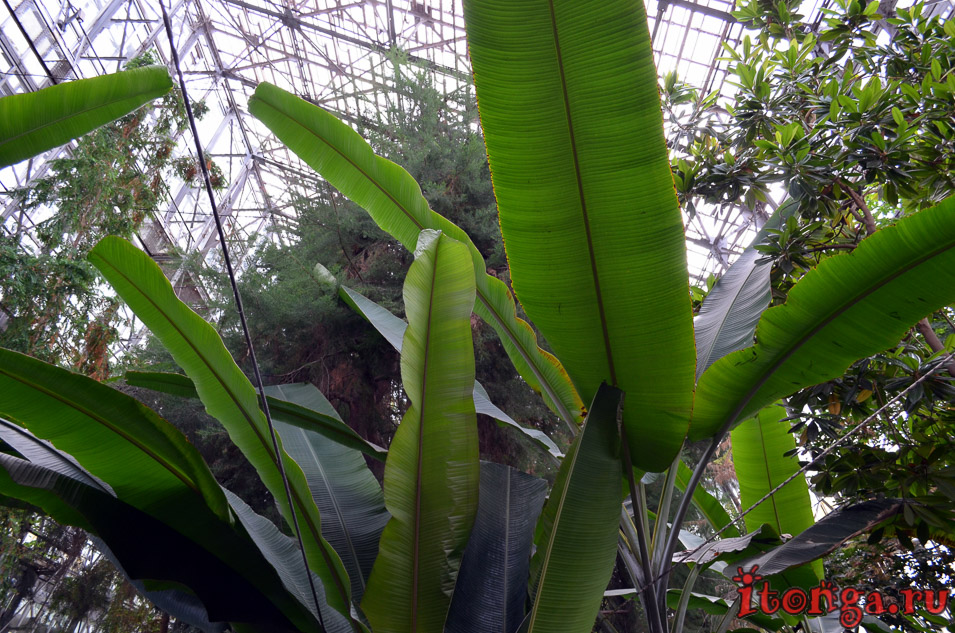 сибирский ботанический сад, томск, растения