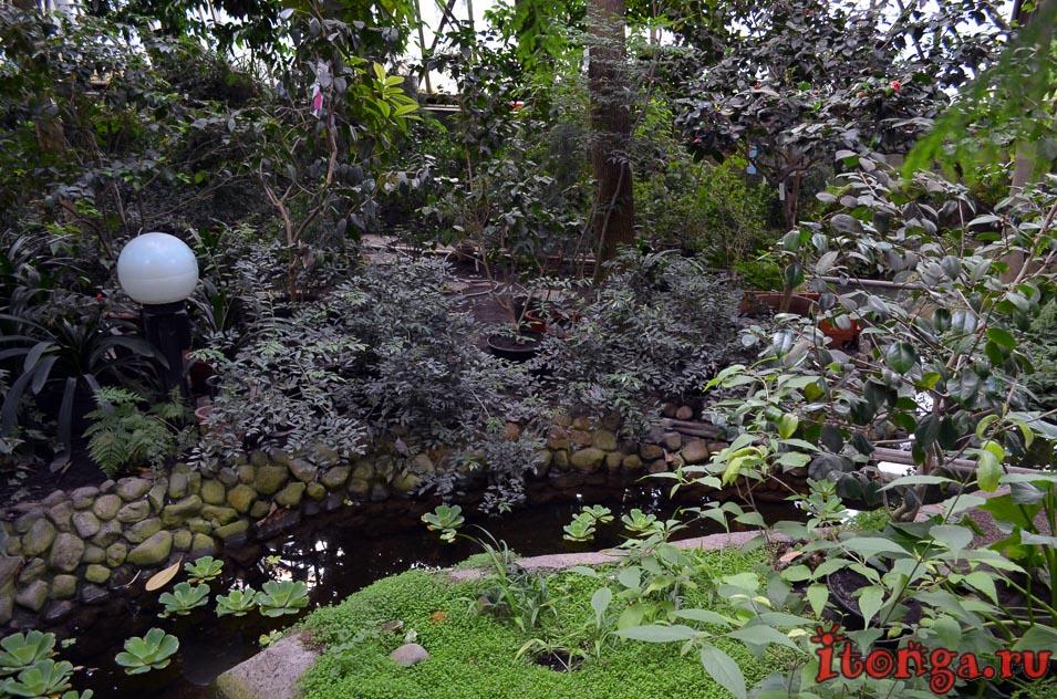 томск, ботанический сад, растения