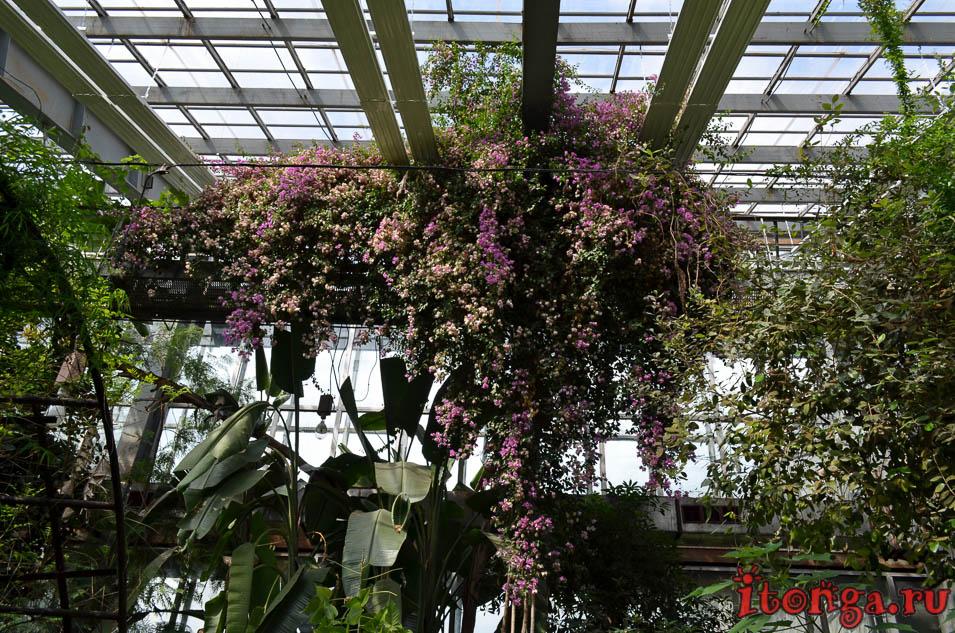оранжерея, цветы, томск