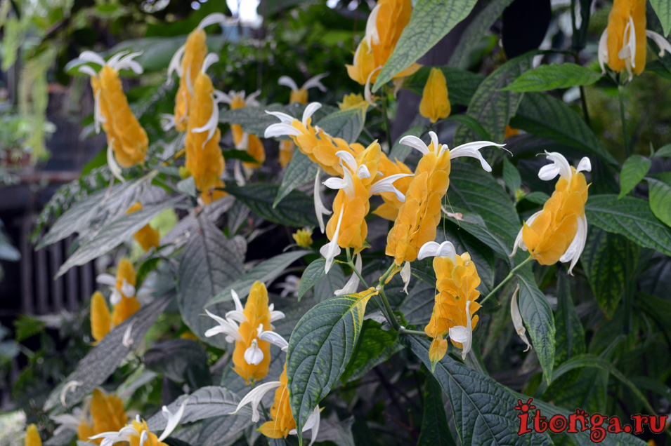 томск, оранжерея, цветы