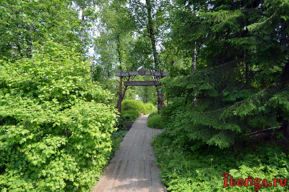 сибирский ботанический сад, заповедная роща, томск, тгу