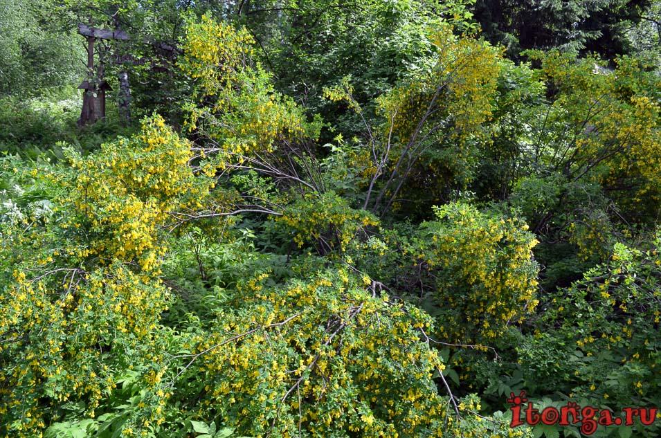 заповедный парк, томс, тгу, ботанический сад