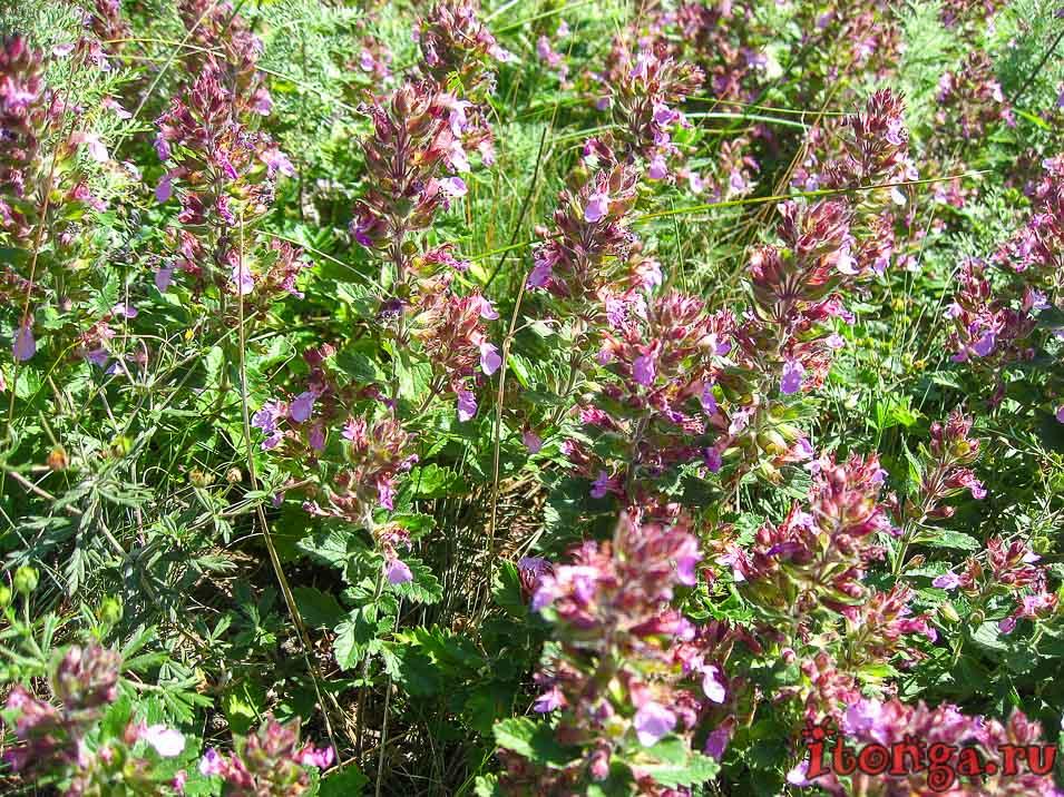 цветы на вершине горы Развалки
