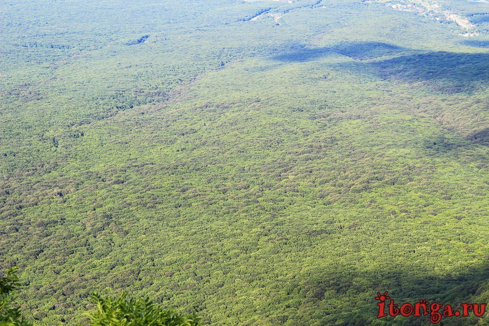 восхождение на Бештау, подъём на гору, Бештаугорский лес