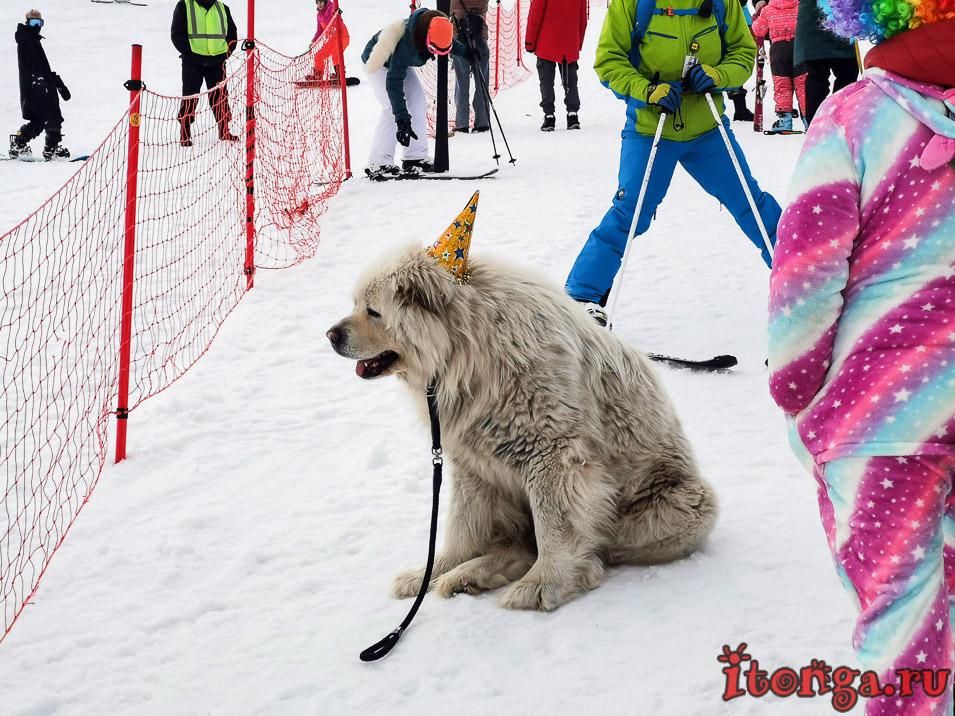 Grelka Fest, Шерегеш, карнавал, Жорик