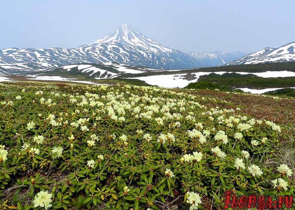 куда поехать в июне отдыхать в России, Камчатка