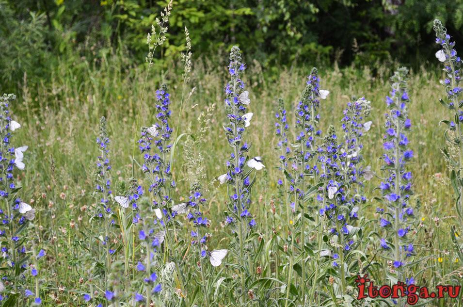 голубые озера темиртау, природа