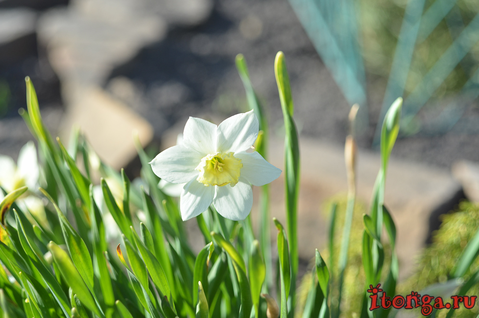 храм иоанна воина в новокузнецке, цветы